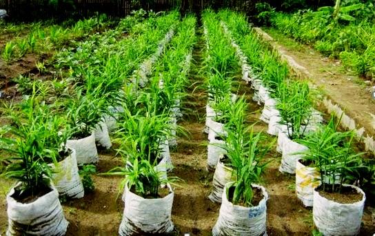 peluang-usaha-pertanian-yang-menjanjikan1