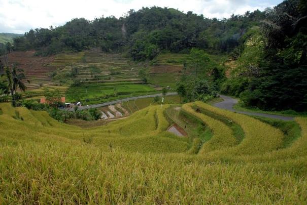 Pemandangan lahan pertanian di Desa Deudel, Tasikmalaya, Jawa Barat, Rabu (28/1)